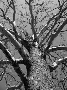 tree-17708_640