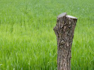 tree-203683_640